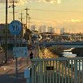 写真: 八田川沿いから見た名駅ビル群 - 12