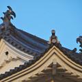 大垣公園 - 33:大垣城の天守鯱瓦