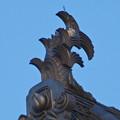 大垣公園 - 34:大垣城の天守鯱瓦