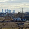 写真: 大池緑地公園から見た名駅ビル群 - 4