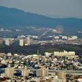 東山スカイタワー展望階から見た景色 - 7:愛・地球博記念公園の大観覧車