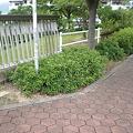 Photos: 植え込みや柵で道幅が3分の1に!!(小牧市篠岡1丁目)_02