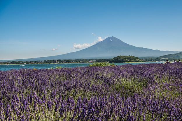 Photos: ラベンダーと富士山