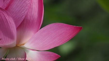 「 真理と理想 」 宇治植物公園 蓮の花