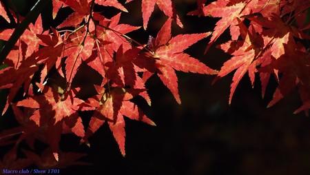 光のパレット 2016 もみじ林 025 赤の星空