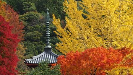 光のパレット 三室戸寺の紅葉と三重塔