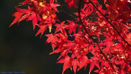 光のパレット 三室戸寺の紅葉 065 満ちる時