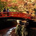 写真: 御土居の紅葉