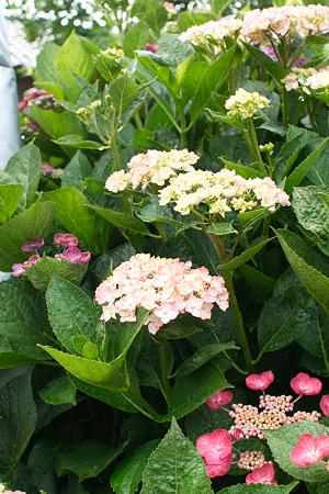 flower06252011sd15-02