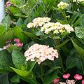 Photos: flower06252011sd15-02
