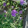 Photos: flower07172011sd15-02