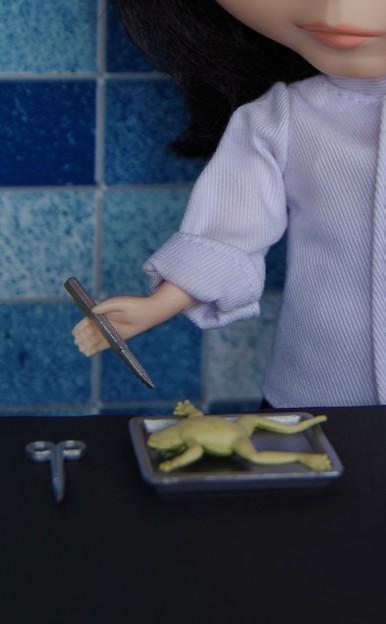 第112回モノコン 解剖・・メス