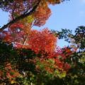 写真: 空と紅葉