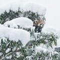こんもり積もった雪に慎重だった午前中とはうってかわって、縦横無尽に満喫、キクちゃん @安佐