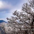 写真: U2250174-1