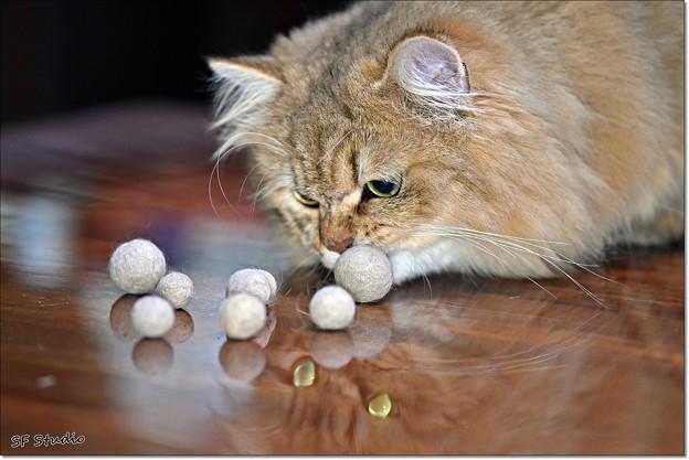 写真: 第109回モノコン タロウ君と猫玉