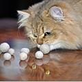 Photos: 第109回モノコン タロウ君と猫玉