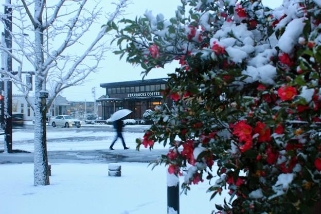 スタバのある街角~未明の雪
