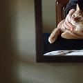 鏡の中のお膝猫
