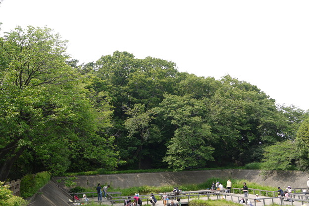 写真: 多摩川亀甲山古墳