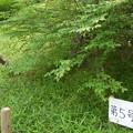 写真: 多摩川台古墳群5号墳