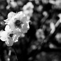 写真: fullsizeoutput_947