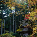 秋の光前寺