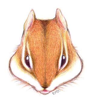 リスの顔(カラー)