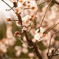 写真: 春の兆し