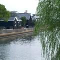 運河沿いの柳