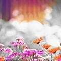 Photos: Floral magic in spring(10020)