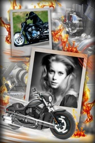 French Fairy Catherine Deneuve(26)