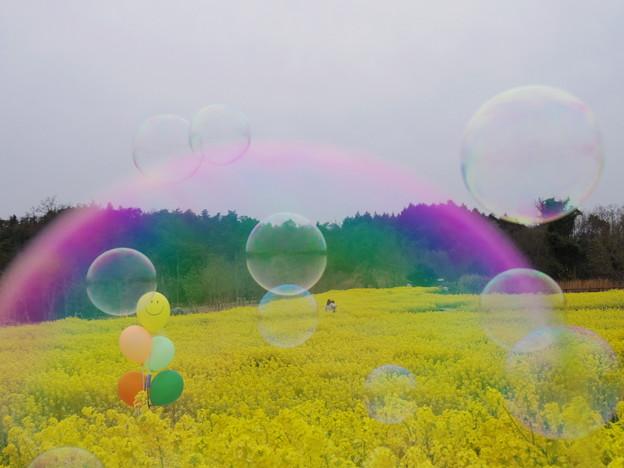 虹の中のように・・・