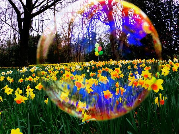 しゃぼんの中の春