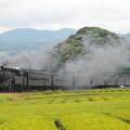 Photos: C10急行かわね路 大井川鐵道家山~抜里04
