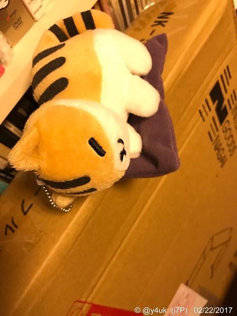 ねこの日に届いたテーブル梱包の上で寝かせた、ねこあつめ