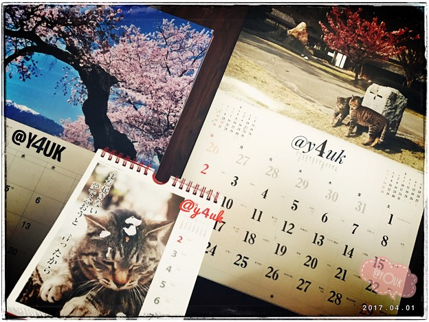 @y4uk月スタート ~April spring cat sakura