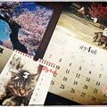 写真: @y4uk月スタート ~April spring cat sakura