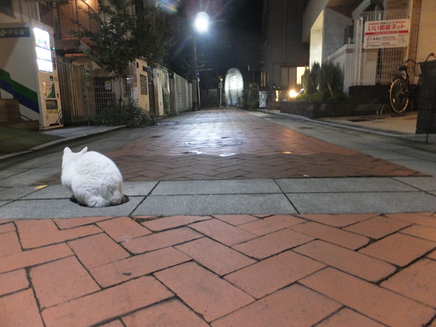写真: 祭りのあと 雑司が谷鬼子母神御会式 H28/10/17