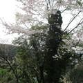 Photos: shingai31