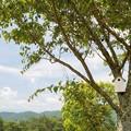 写真: 木陰の下で