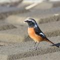 鳥撮り初め-1番目の鳥