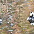春色水面のミコペア