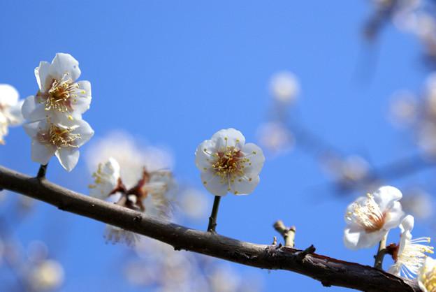 Photos: 降雪後の晴天