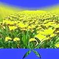 写真: the world of yellow-03