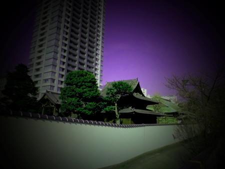 目黒川沿い_東海寺-01d