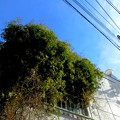 写真: 道すがら_家屋-05蔦a