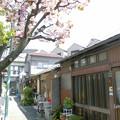 写真: 道すがら_八重桜
