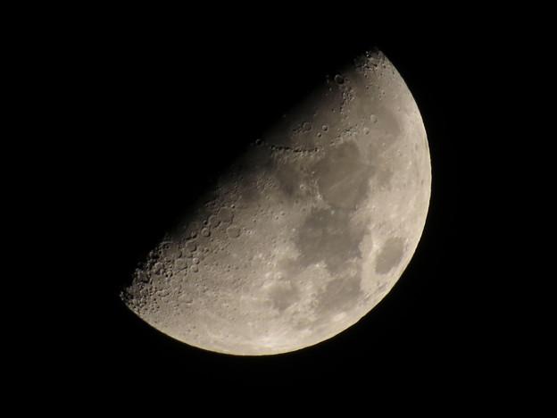 上弦の月(月齢7.8)