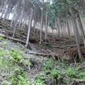 鋸山林道にて